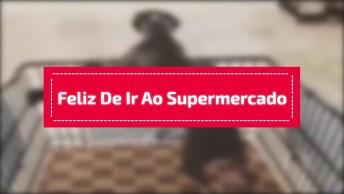 Cachorrinho Feliz De Ir Ao Supermercado, Olha Só A Ansiedade Dele!