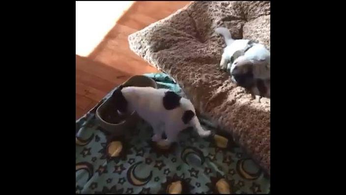 Cão comendo e dançando