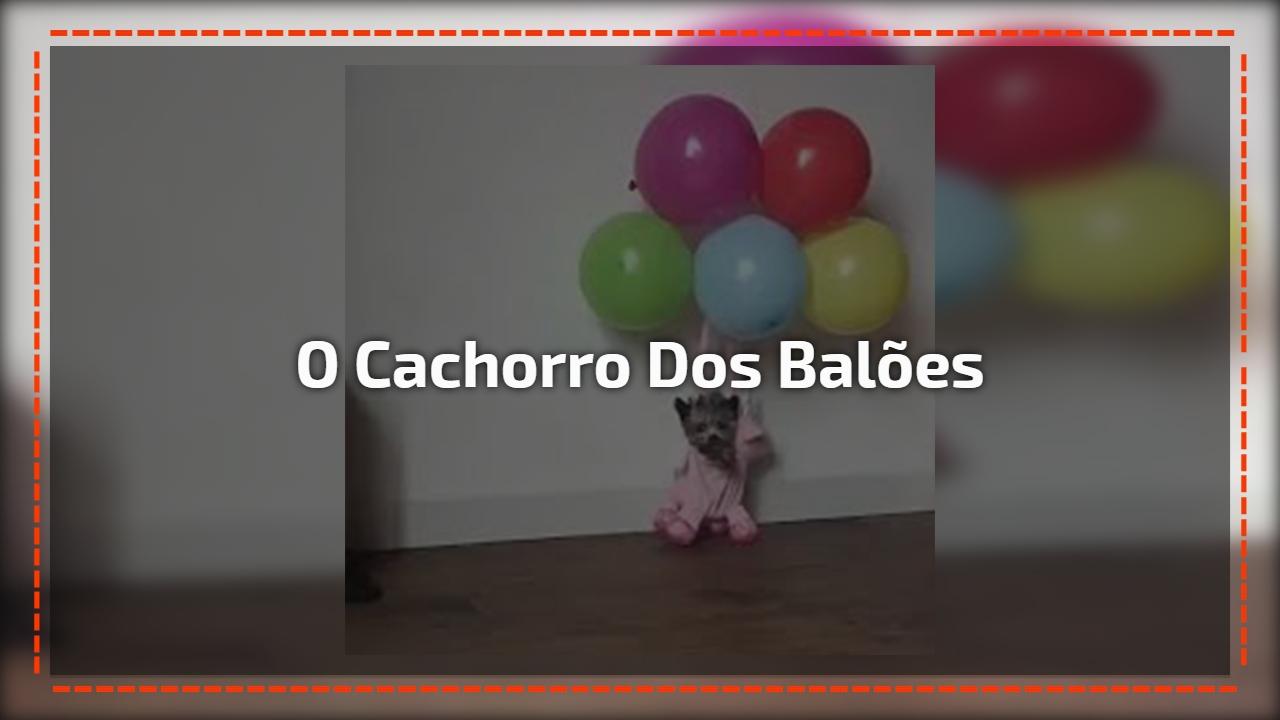 Cachorrinho flutuando com balões, um video fofo para postar!
