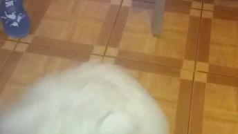 Cachorrinho Fofinho Correndo Atrás Do Rabo, É Uma Gracinha!