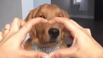 Cachorrinho Fofo Adora Interagir Com Seu Dono, É Só Ele Mostrar A Mão E Ele Vem!