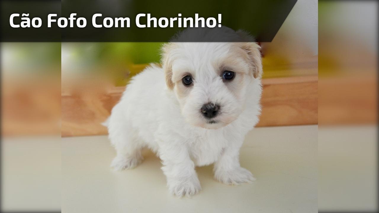 Cachorrinho fofo com chorinho bonitinho, olha só que fofura!!!