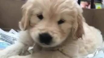 Cachorrinho Fofo Fazendo Brincadeirinha Adorável, Muito Lindo!