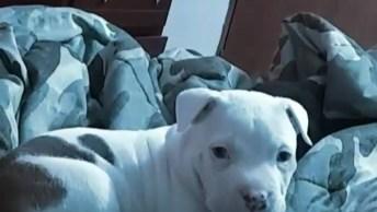 Cachorrinho Fofo Para Compartilhar No Facebook, Anjinho De 4 Patas!