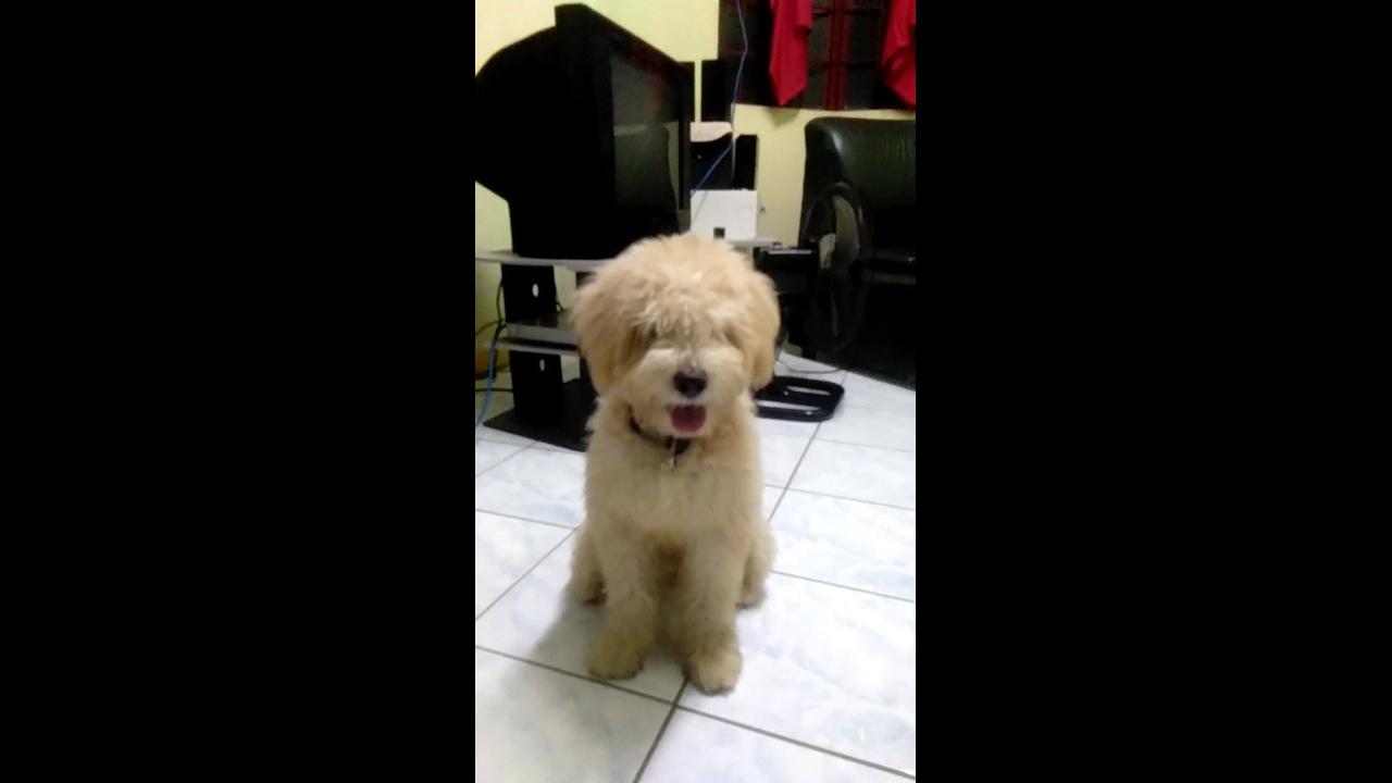 Cachorrinho fofo para compartilhar no Facebook