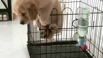Cachorrinho Fugindo Do Cercadinho, Veja Que Alegria É A Liberdade!