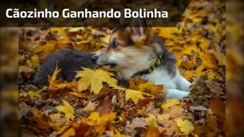 Cachorrinho Ganha Bolinha Nova E Fica Todo Empolgado, Confira!