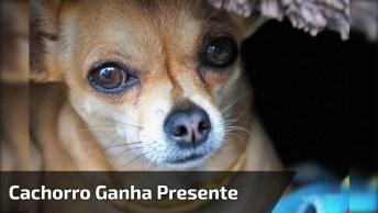 Cachorrinho Ganha De Presente Um Travesseiro E Um Lençol, Que Fofura!