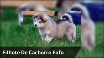 Cachorrinho Gordinho Super Fofo, Tem Como Não Amar Esse Bichinho?
