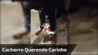 Cachorrinho Grudado Na Perna Do Humano, Que Cosia Mais Fofa!
