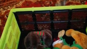Cachorrinho Guardando Os Brinquedos Na Caixa, Um A Um Ele Pega E Guarda!