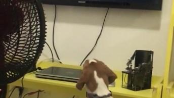 Cachorrinho Hipnotizado Por Símbolo Na Televisão, Veja Que Fofo!