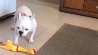 Cachorrinho Imitando Som Da Galinha De Brinquedo, Olha Só Que Engraçadinho!