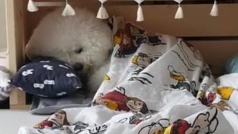 Cachorrinho Indo Deitar Na Caminha, Que Fofura, Tenha Bons Sonhos!