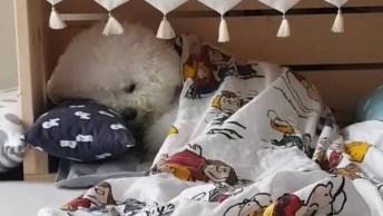 Cachorrinho Indo Deitar Na Sua Caminha, Que Caminha Mais Linda!