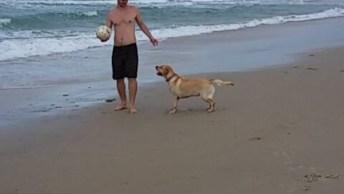 Cachorrinho Jogando Bola Na Praia, Olha Só Como Ele É Espertinho!