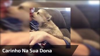 Cachorrinho Lambendo O Queixo De Sua Humana, Ele É Muito Fofinho!