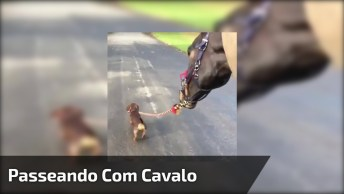 Cachorrinho Levando Cavalo Para Dar Uma Volta, Olha Só Que Fofinho!