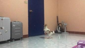 Cachorrinho Louco Para Ir Passear, Veja Como Ele Fica Ansioso Na Porta!