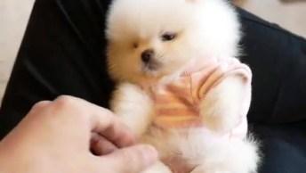 Cachorrinho Mais Bonitinho Que Você Já Viu Na Vida, Olha Só Que Fofo!