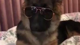 Cachorrinho Mais Estiloso Que Você Já Viu, Olha Só Que Charmoso!