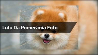 Cachorrinho Mais Fofinho Que Você Vai Ver Hoje No Pet Shop!
