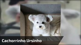 Cachorrinho Mais Fofinho Que Você Vai Ver Hoje, Olha Só A Carinha Dele!