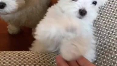 Cachorrinho Mais Fofinho Que Você Vai Ver Hoje, Olha Só Estas Patinhas!