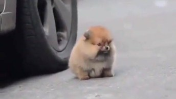 Cachorrinho Mais Fofinho Que Você Vai Ver Hoje, Olha Só O Tamaninho Dele!