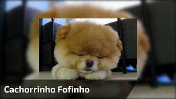Cachorrinho Mais Fofinho Que Você Vai Ver Hoje, Olha Só Que Lindo!