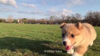 Cachorrinho Mais Fofo Do Mundo Para Compartilhar No Facebook!