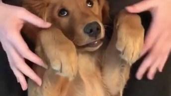 Cachorrinho Mais Fofo E Lindo Do Dia, Tem Como Resistir A Essa Carinha?