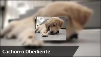 Cachorrinho Mais Obediente Que Você Já Viu Na Vida, Olha Só Que Fofo!