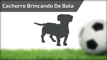 Cachorrinho Merece Um Lugar Na Seleção Brasileira, Olha Só Como Sabe Jogar Bola!