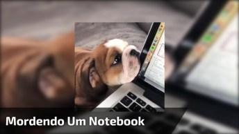 Cachorrinho Mordendo Um Notebook, Parece Esta Gostoso Isso Hein, Hahaha!