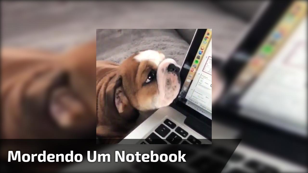 Mordendo um Notebook