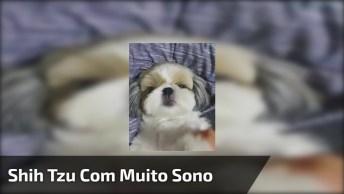 Cachorrinho Morrendo De Soninho, Não Quer Nem Mexer, Hahhaa!