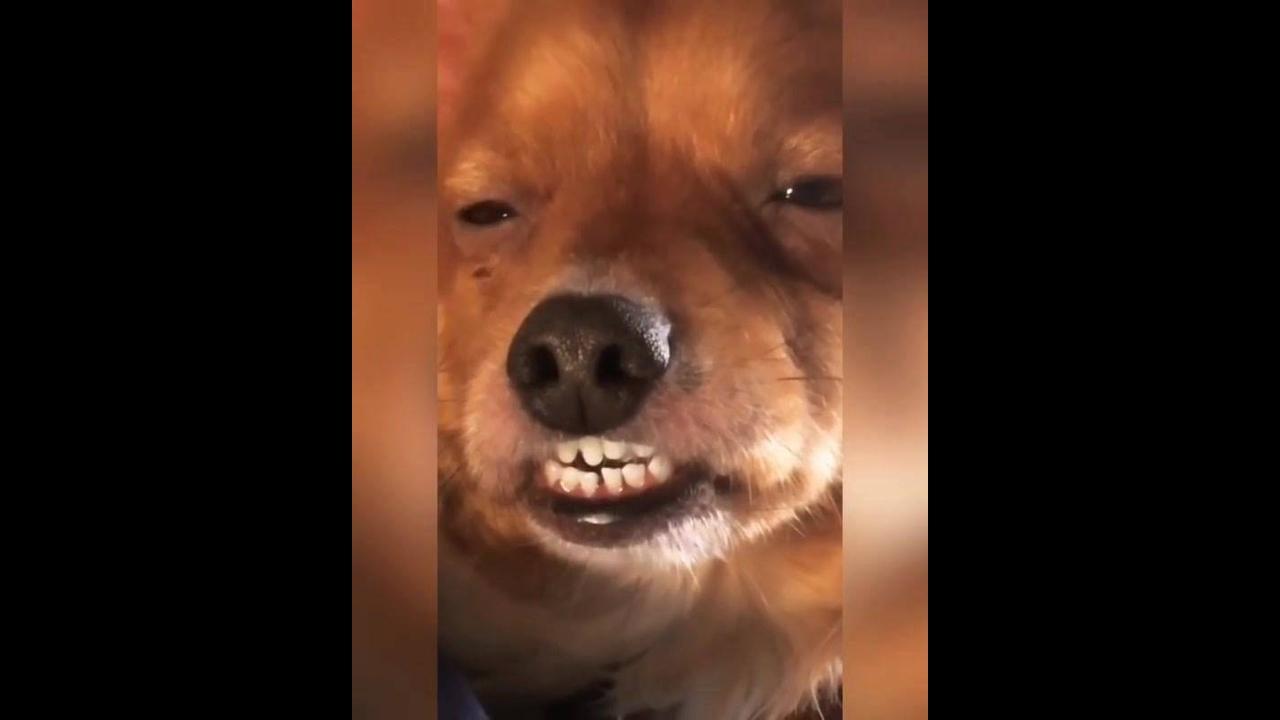 Cachorrinho morrendo de sono, olha só esta carinha que engraçado!!!