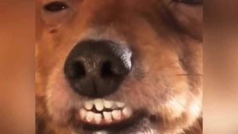Cachorrinho Morrendo De Sono, Olha Só Esta Carinha Que Engraçado!
