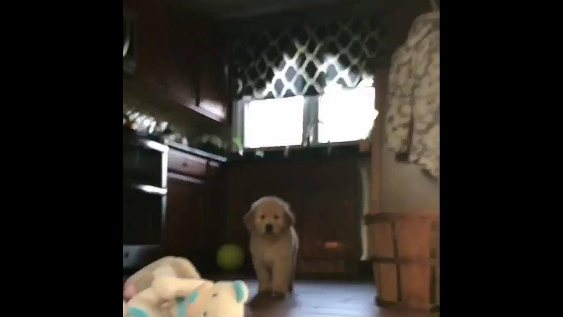 Cachorrinho muito fofinho dando um oi