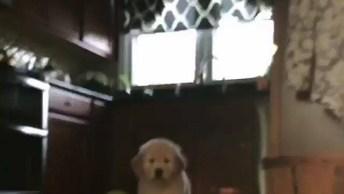 Cachorrinho Muito Fofinho Dando Um Oi, Confira A Carinha Dele!