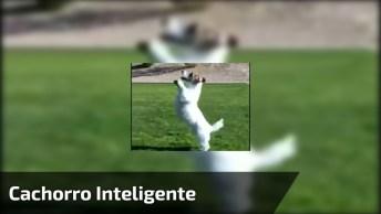Cachorrinho Muito Inteligente, Veja As Coisas Que Ele Faz, Muito Legal!