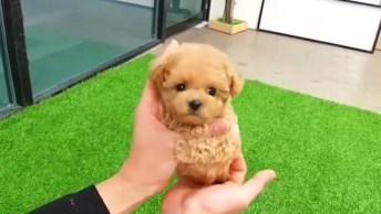 Cachorrinho Muito Pequenininho, Olha Só Que Coisinha Mais Fofinha!