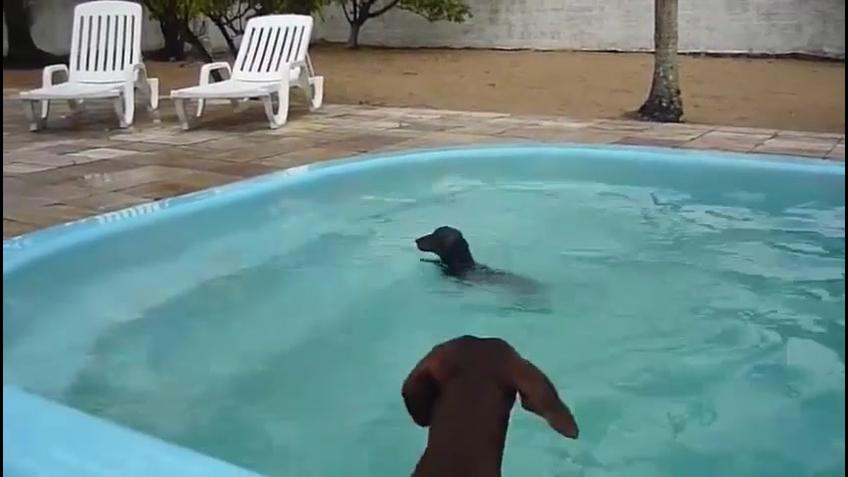 Cachorrinho nadando, olha só a carinha dele de felicidade
