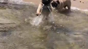 Cachorrinho Nadando Pela Primeira Vez, Olha Só Que Fofura!