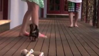 Cachorrinho Não Pode Ver Ninguém Atacar A Mamãe, Veja O Que Ele Faz!