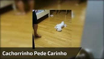 Cachorrinho Não Pode Ver O Dono Que Já Vira De Barriga Para Cima!