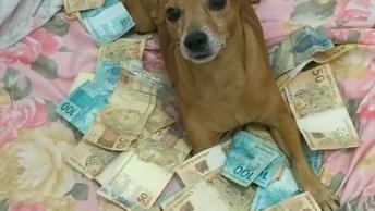 Cachorrinho Não Quer Deixar Seu Dono Chegar Perto Do Dinheiro, Hahahah!