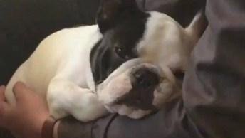 Cachorrinho Não Quer Que Seu Dono Tire O Braço De Perto Dele, Que Fofo!