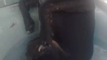 Cachorrinho Não Quer Sair Do Banho, Veja Como Fica Bravo Quando Tentam Tira-Lo!